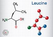 Leucine ( L- leucine,  Leu,  L)  molecule. It is essential amino acid. Sheet of paper in a cage. Structural chemical formula and molecule model