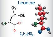 Leucine ( L- leucine,  Leu,  L)  molecule. It is essential amino acid.  Structural chemical formula and molecule model