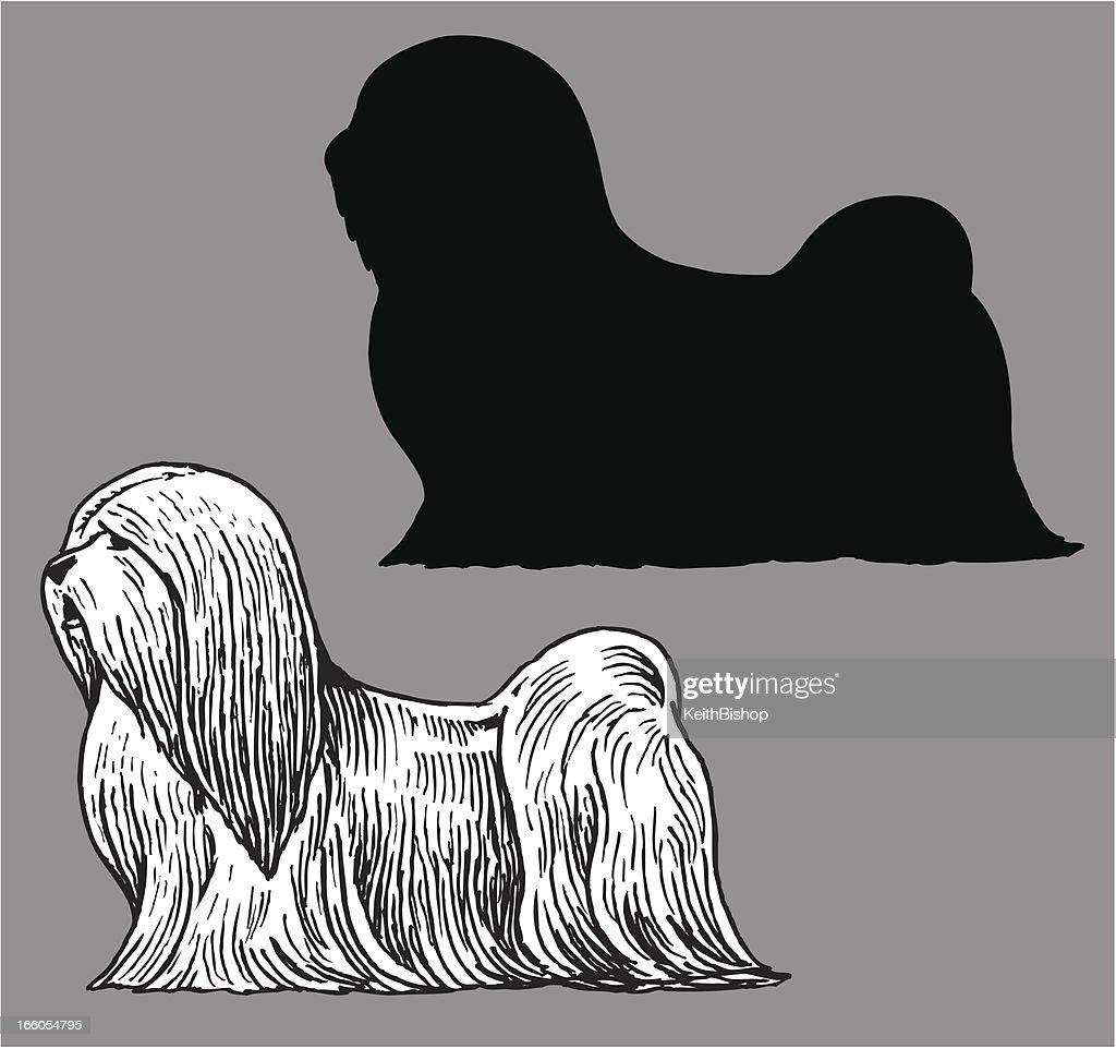 Lhasa Apso Dog Domestic Pet High Res Vector Graphic Getty Images