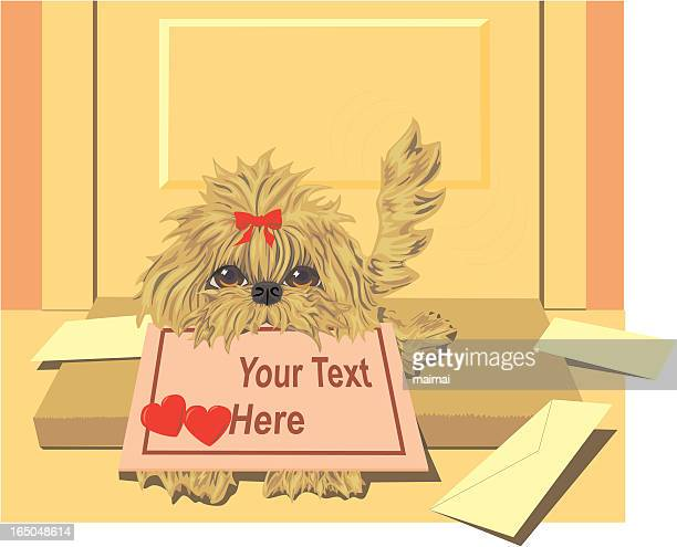 Lhasa Apso Puppy with Valentine Delivery