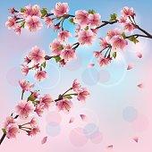 Light background with sakura blossom - Japanese cherry tree