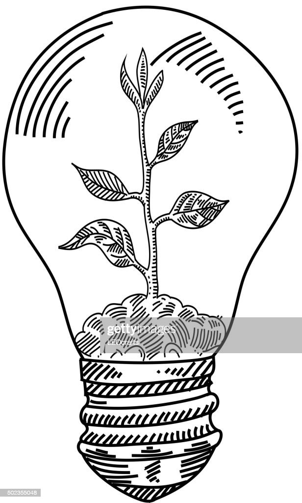 Light Bulb With Plant Drawing Vector Art Getty Images