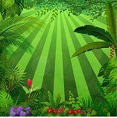 Lighting jungle background