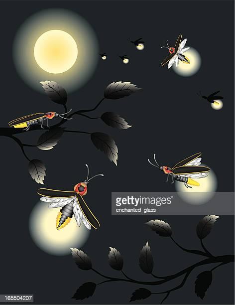 Lightning Bugs / Fireflies in Moonlight