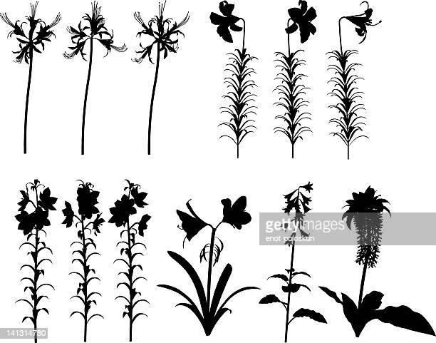 lilies silhouettes - easter lily stock illustrations