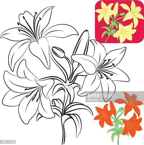 lilies - lily stock illustrations, clip art, cartoons, & icons