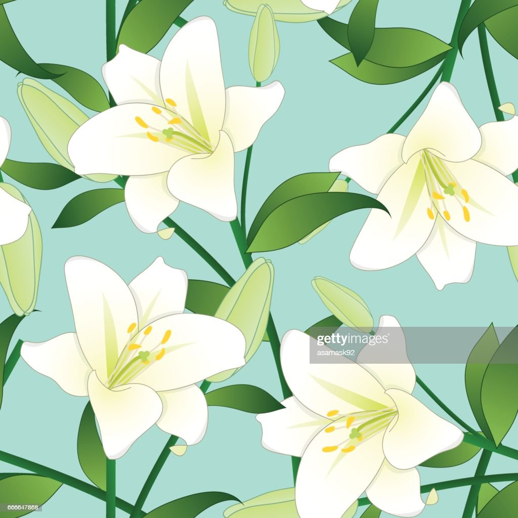 Lilium candidum the madonna lily or white lily on green mint lilium candidum the madonna lily or white lily on green mint background vector illustration izmirmasajfo Gallery