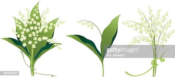 illustrazioni stock, clip art, cartoni animati e icone di tendenza di fiori di giglio della valle delle variazioni - mughetti