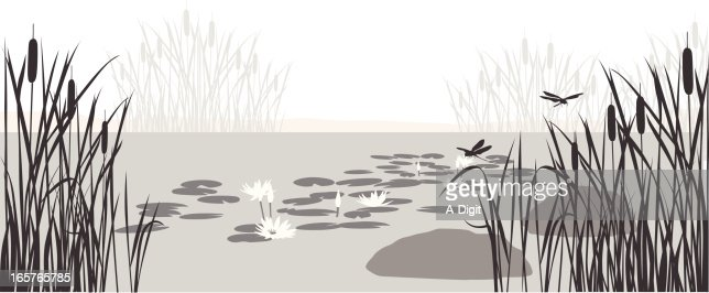Lily Pond Vector Silhouette High-Res Vector Graphic ...