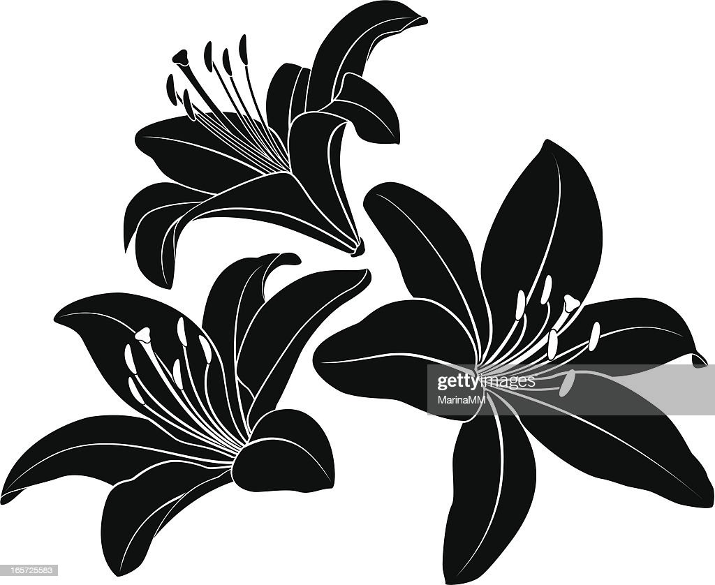 Lily silhouette