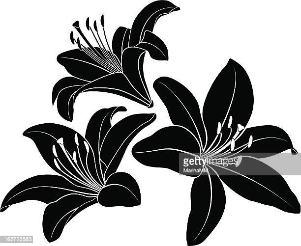 lily silhouette - lily stock illustrations, clip art, cartoons, & icons