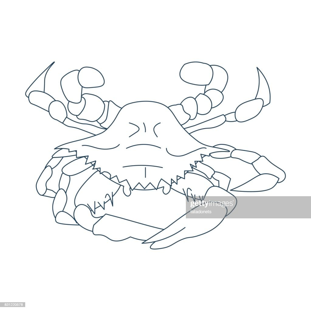 Line Art Styled Vector Illustration: Maryland or Baltimore crab, Atlantic Blue crab, or the Chesapeake bay blue crab also called Callinectes sapidus.
