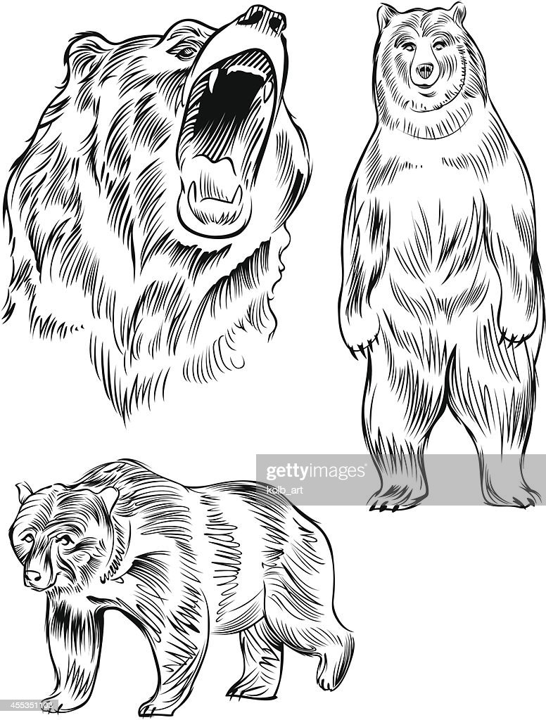 Line Drawing Bear : Line drawing of a bear vector art getty images