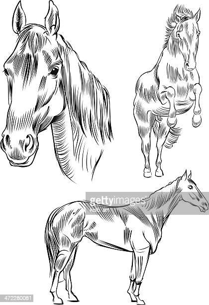 line drawing of a horse - stallion stock illustrations, clip art, cartoons, & icons