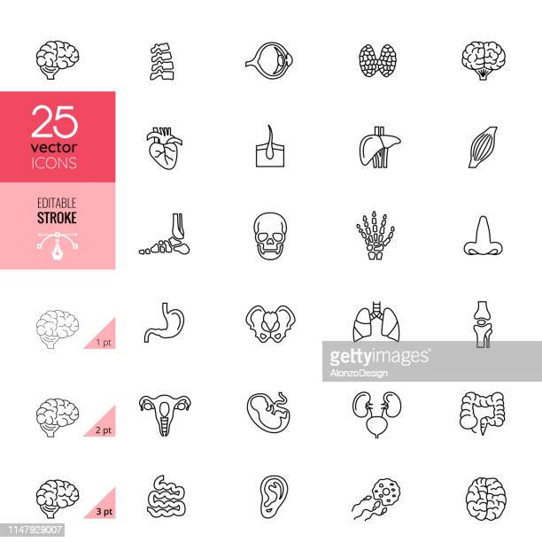 line organ icon set. editable stroke. - brain stock illustrations