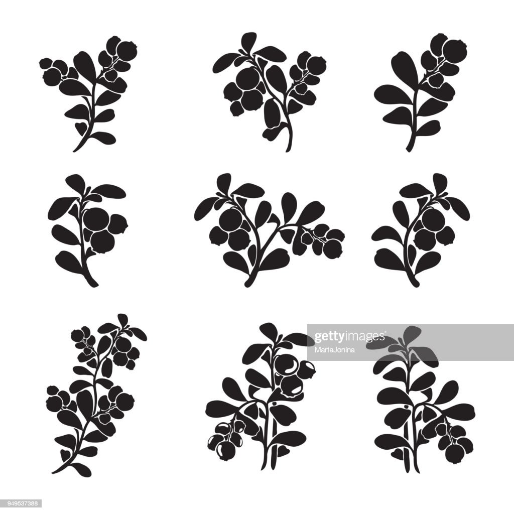 Lingonberry silhouette branches