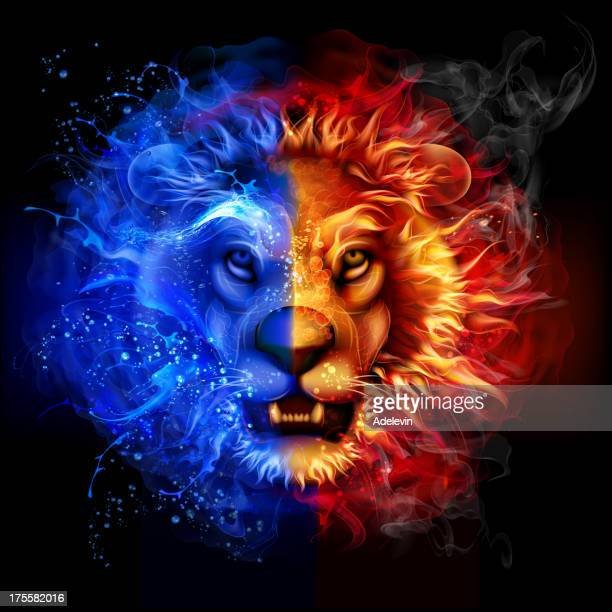 lion from fire and water - lion feline stock illustrations