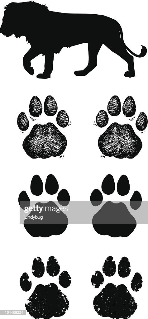 Lion Paw Prints