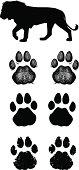 Lion Paw Prints