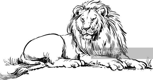 illustrations et dessins anim s de lion getty images. Black Bedroom Furniture Sets. Home Design Ideas