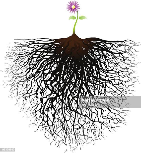 little flower - root stock illustrations, clip art, cartoons, & icons