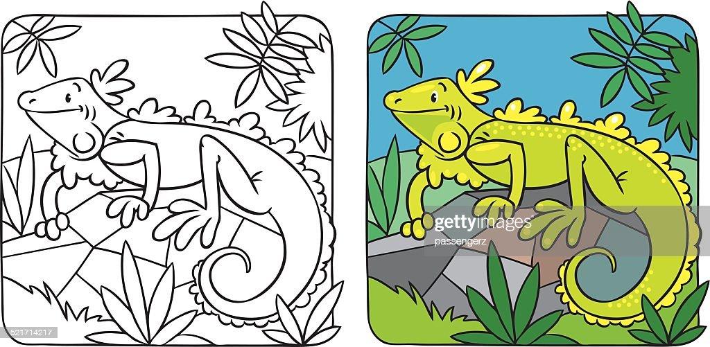 Little iguana coloring book