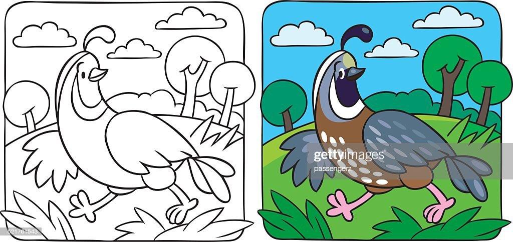 Little quail coloring book