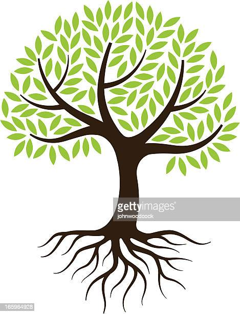 little tree illustration with roots. - tree stock illustrations, clip art, cartoons, & icons