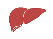 Liver icon in trendy flat style. People body part.