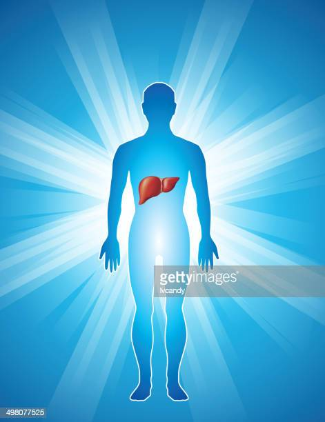 liver in human body - human liver stock illustrations, clip art, cartoons, & icons
