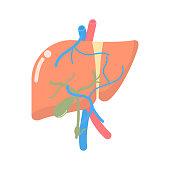 liver, internal organs anatomy body part nervous system