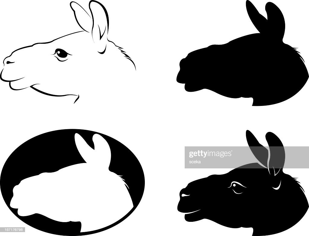 llama : stock illustration