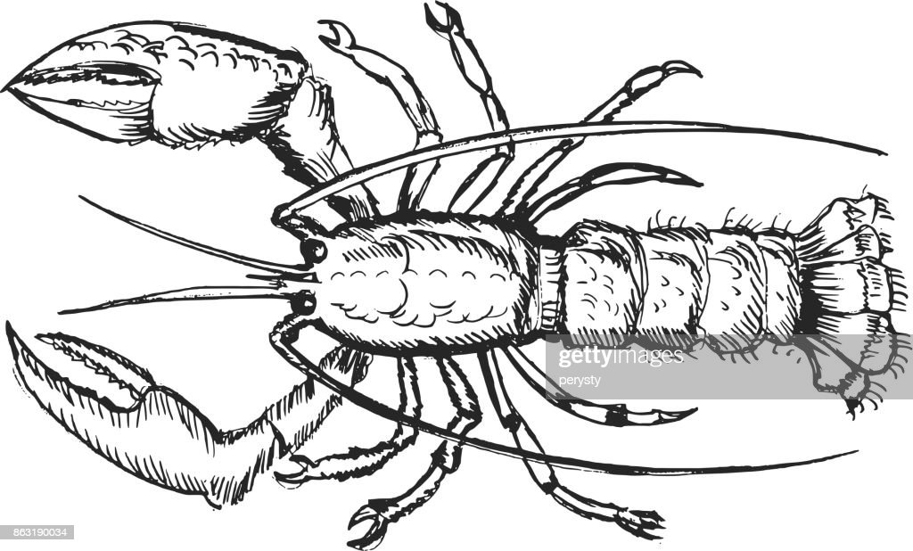 lobster, top view