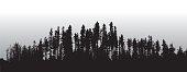 Lodge Pole Pines Treeline