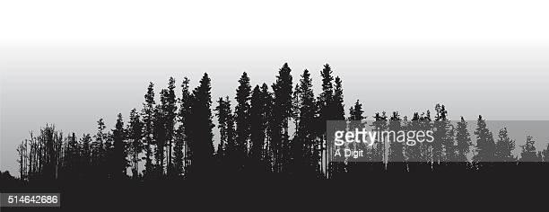 lodge pole pines treeline - treelined stock illustrations, clip art, cartoons, & icons