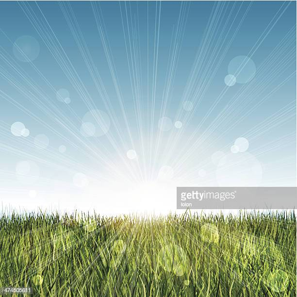 long grass landscape with blue sky and lens flare - prairie stock illustrations, clip art, cartoons, & icons