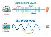 Longitudinal and Transverse wave type, vector illustration scientific diagram. Sonic and visual perception principle.