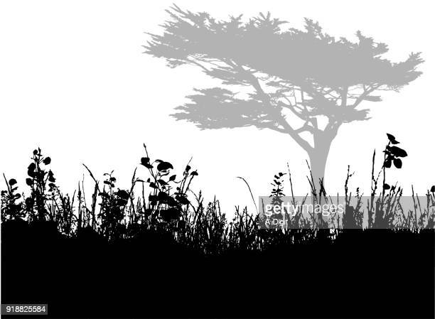 looking up grass to trees - cypress tree stock illustrations