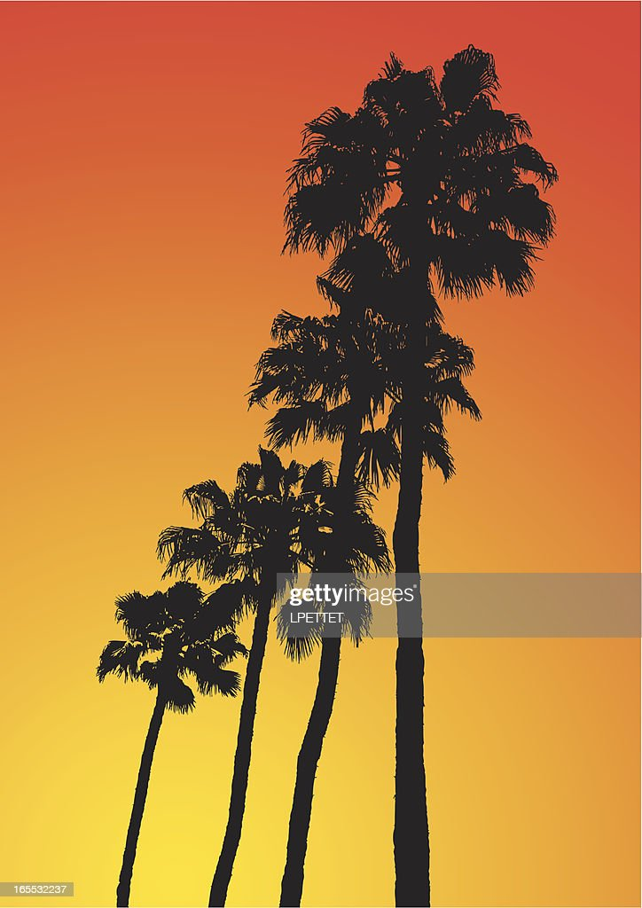 Los Angeles Palm Trees : stock illustration