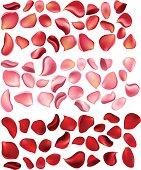 Lot of different rose petals isolated