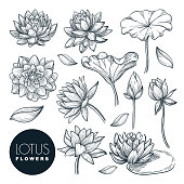 Lotus beautiful blooming flowers and leaves set, isolated on white background. Vector hand drawn sketch illustration