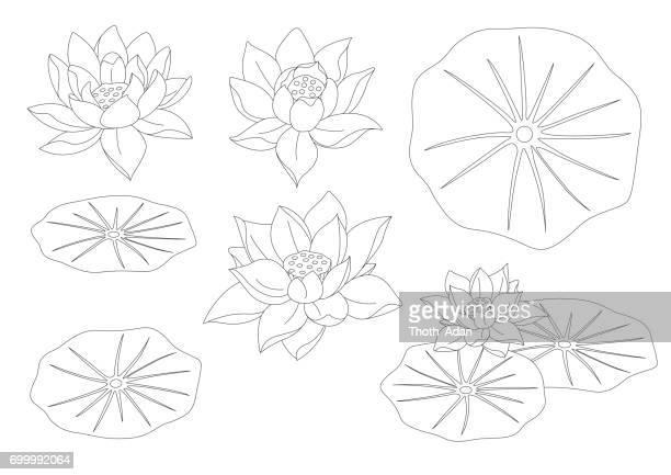 lotus flower set line art - lily stock illustrations, clip art, cartoons, & icons