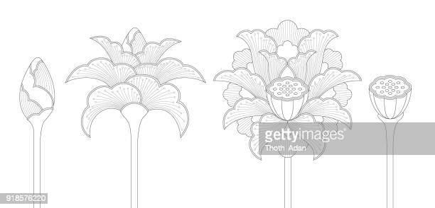 illustrations, cliparts, dessins animés et icônes de lotus fleur sertie de bourgeons, les fleurs et gousse (line art) - lotus