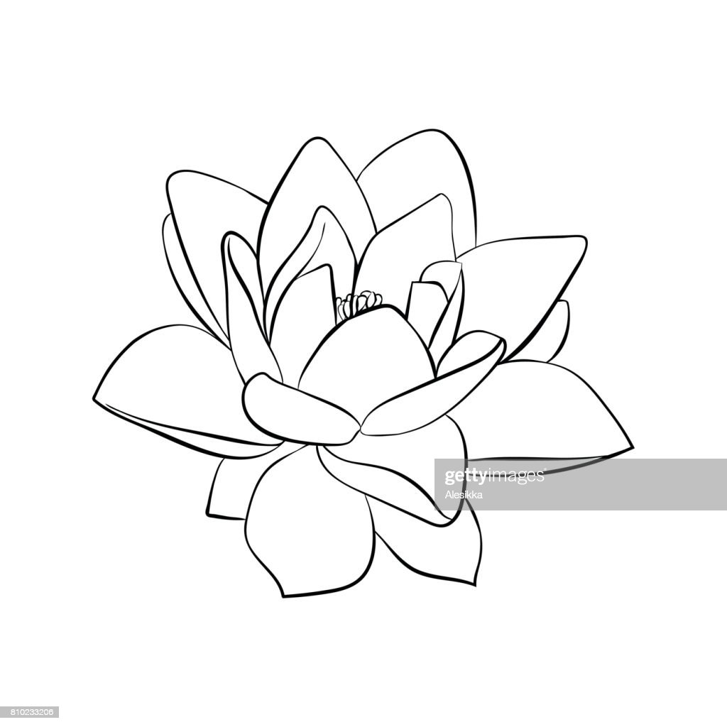 Lotus Flowers Icon Vector Art