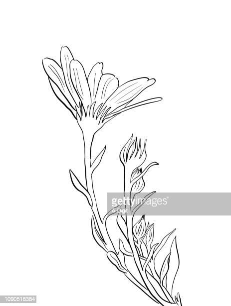 lovely flower and buds - wildflower stock illustrations