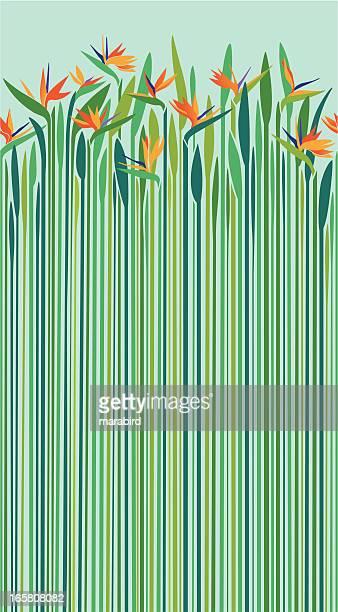 ilustrações, clipart, desenhos animados e ícones de ave-do-paraíso-padrão sem emendas - flowerbed