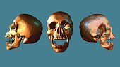 Low poly skull in various view