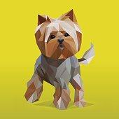Low polygonal Yorkshire Terrier portait