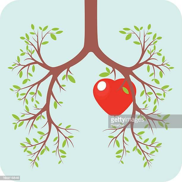 ilustraciones, imágenes clip art, dibujos animados e iconos de stock de concepto de pulmón y corazón - sistema respiratorio