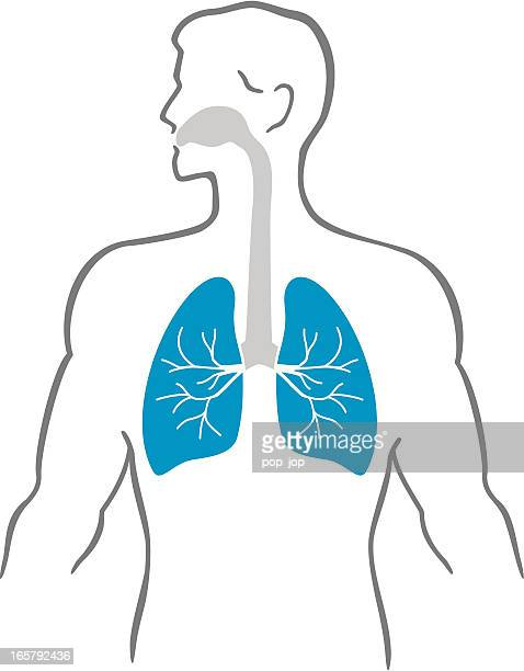 lungs and human body - nasal passage stock illustrations